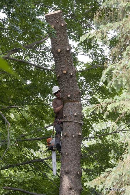 Edwards Tree Service 413 325 7823 978 544 7452